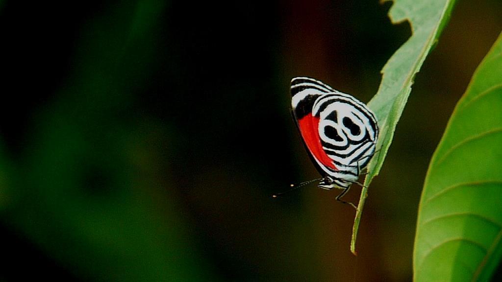 Nature Tours in Ecuador