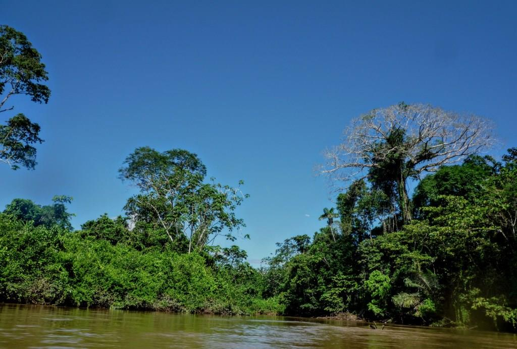 Trees of Rainforest